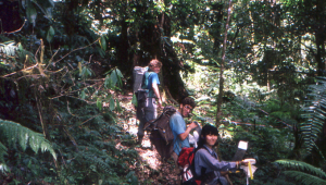 Lorna's fantastic team of venturers setting box traps in the oak forest at 1500 metres on Gunung Binaia.