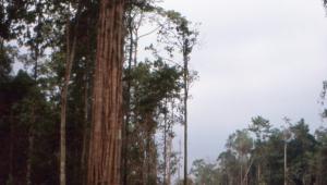 The logging road north.
