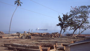 The logging camp was located right on the beach.