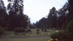 The gardens at Cibodas in the late arfternoon