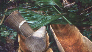 Hollowed sago palms.