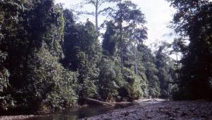 We followed the Wae Toluarang River inland.