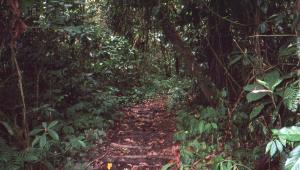 Our path through the rainforest.
