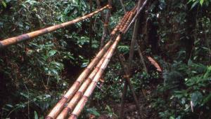 Bamboo foot bridge on the trail.