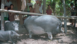 Lombok020
