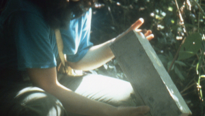 Lorna checks a box trap for small mammals.
